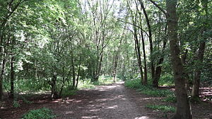 Covert Way - Path in Covert Way woodland