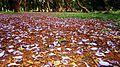 Cubbon - Bedsheet of flowers.jpg