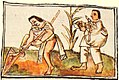 Cultivo con uictli Códice Florentino libro X f.28.jpg