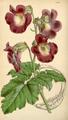 Curtis's Botanical Magazine, Plate 4292 (Volume 73, 1847).png