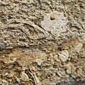Cut Block of Coralline Crag with Bryozoan Fossils in a Church Wall in Suffolk.jpg