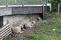 Dülmen, Hausdülmen, Brücke am Kettbach -- 2018 -- 0033.jpg