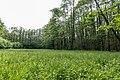 Dülmen, Naturschutzgebiet -Franzosenbach- -- 2014 -- 0032.jpg