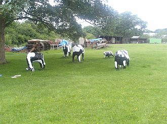 Concrete Cows - The restored original cows, now back home at MK Museum, June 2017