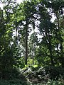 Dappled shade - geograph.org.uk - 544245.jpg