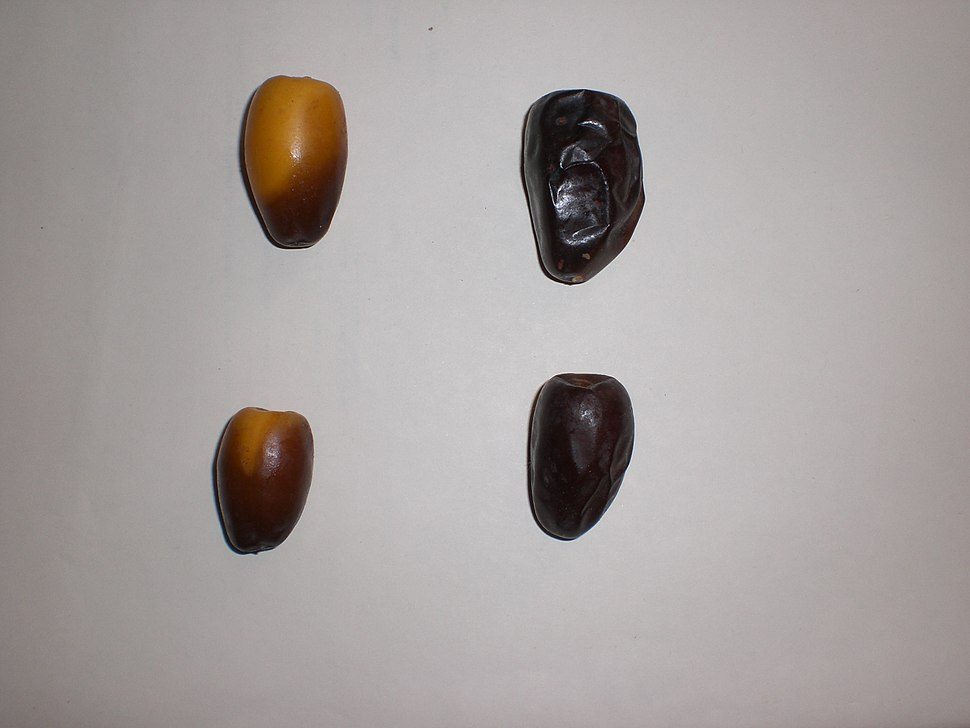 Dates Tozerzait