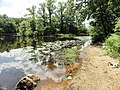 Davidson Mill Pond Park, South Brunswick, New Jersey USA July 15th, 2013 - panoramio (2).jpg