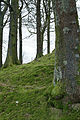 Day 4- Trees at Grasmere (8411837547).jpg