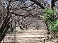 De Anza Trail, Tumacacori National Historical Park (6127872372).jpg