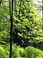 Dendropark (spring) 02.JPG