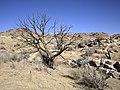 Desert wanderings (11746740995).jpg
