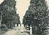 Deutsch-Ostafrika, Ostafrikanische Nutzpflanzen (Busse) - Tafel 38 - Gewürznelkenbäume.jpg