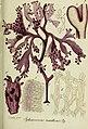 Deutschlands flora in abbildungen nach der natur (1832) (20702807179).jpg
