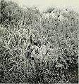 Die Pflanzenwelt Afrikas, insbesondere seiner tropischen Gebiete - Grundzge der Pflanzenverbreitung im Afrika und die Charakterpflanzen Afrikas (1910) (20914013096).jpg