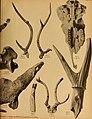 Die Pithecanthropus-Schichten auf Java. Geologische und paläontologische Ergebnisse der Trinil-Expedition (1907 und 1908), ausgeführt mit Unterstützung der Akademischen Jubiläumsstiftung der Stadt (20320762293).jpg