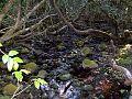 Dilgry River 1420 m.jpg