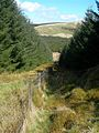 Down The Fire Break - geograph.org.uk - 779075.jpg