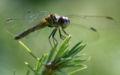 Dragonfly ran-389.jpg