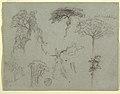 Drawing, Studies of Trees, Ecuador, 1853 (CH 18194191).jpg
