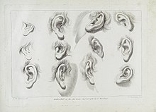 Drawings of Ears in Ciprianii's 'Rudiments of Drawing.. Wellcome L0033917.jpg
