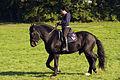 Dressage individuel mondial du cheval percheron 2011Cl J Weber02 (23975357642).jpg