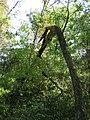 Drvece u parku (4).jpg