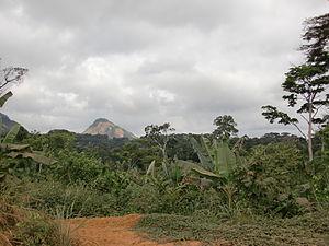 Oyala - Jungle at Oyala