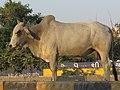 Dwaraka and around - during Dwaraka DWARASPDB 2015 (217).jpg