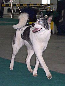 Russian Big Dog Names Male