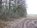 Edge of Grove Wood - geograph.org.uk - 635868.jpg