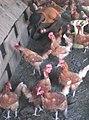 Egg collection.jpg