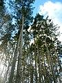 Ekaterinburg - panoramio (65).jpg