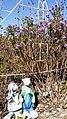 Eldon, IA 52554, USA - panoramio (14).jpg