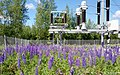 Electrical Transformer and Lupins in Perfect Harmony - panoramio.jpg