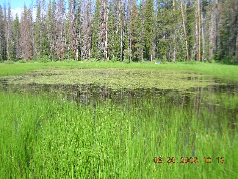 File:Elk Meadow Pond 1.JPG
