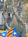 Enric Batlló P1150823.JPG