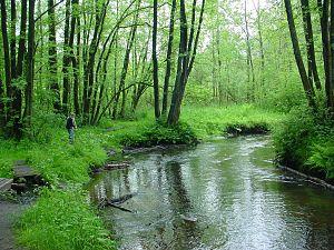 Este (river) - The Este near Kakenstorf.