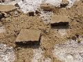 Ethiopie-Exploitation du sel au lac Karoum (7).jpg