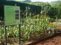 FAI HOR Fla BotanicalGarden agriGarden.jpg