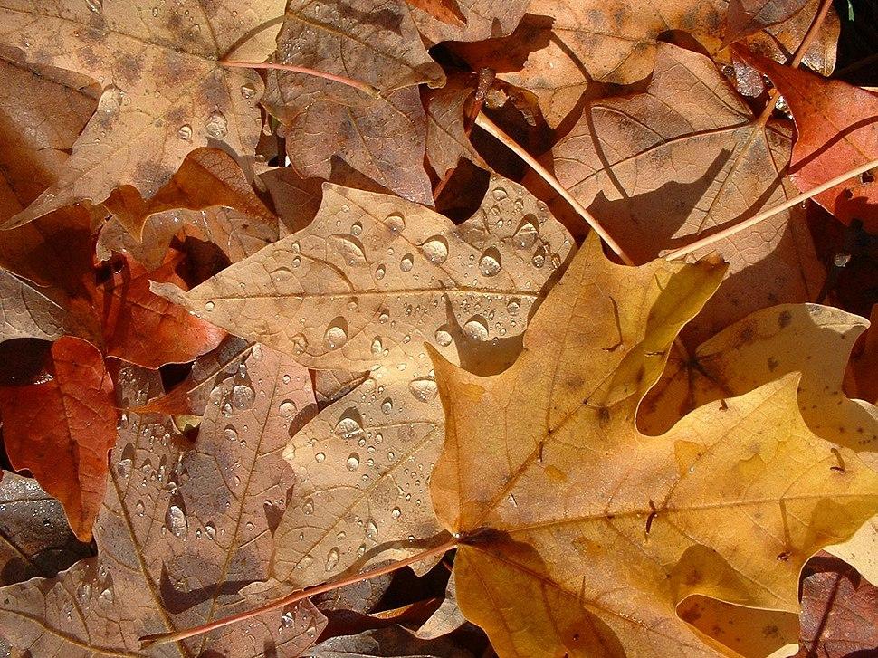 FL autumn leaves