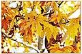 Fall - panoramio (1).jpg