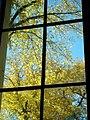 Fall Trees from Office Window (5168970588).jpg