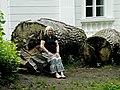 Fallen trees of Elagin island.jpg