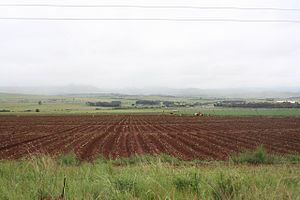 Economy of South Africa - Workers planting on a farm in the central area of Mpumalanga