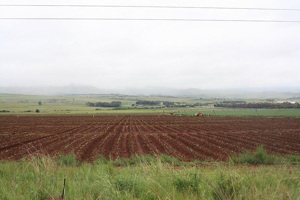 Farm in Mpumalanga