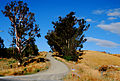 Farm road in Marlborough.jpg
