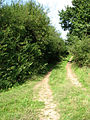 Farm track meets bridleway - geograph.org.uk - 550857.jpg