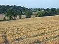 Farmland, Mortimer - geograph.org.uk - 956953.jpg