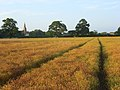 Farmland. Mortimer - geograph.org.uk - 957086.jpg