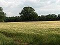 Farmland between Gaitsgill and Dalston - geograph.org.uk - 214379.jpg